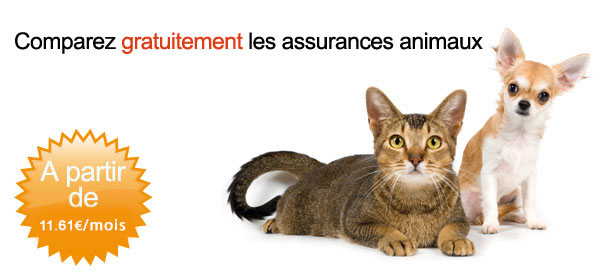 assurance animaux